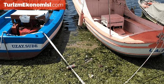İzmir'de denizin yüzeyini 'deniz marulu' kapladı