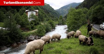 Karadeniz'e 'doğa tatili' ilgisinin arttığı gözlendi